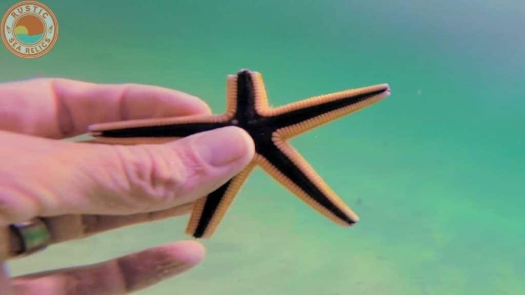 starfish broken arm